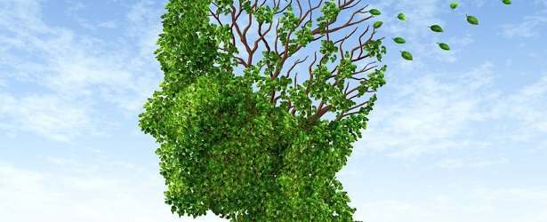 Discover How Ginkgo Can Boost Your Memory